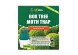 Buxus Moth Trap - 1 Trap